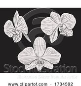 Vector Illustration of Orchid Flower Woodcut Etching by AtStockIllustration