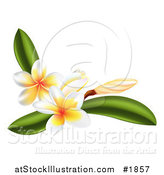 Vector Illustration of Plumeria Flowers and Leaves by AtStockIllustration
