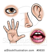 Vector Illustration of the Five Senses, Sight, Smell, Hearing, Touch and Taste by AtStockIllustration