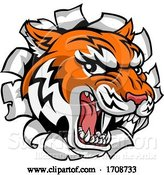 Vector Illustration of Tiger Mascot Head Breaking Through a Wall by AtStockIllustration