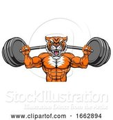 Vector Illustration of Tiger Mascot Weight Lifting Barbell Body Builder by AtStockIllustration