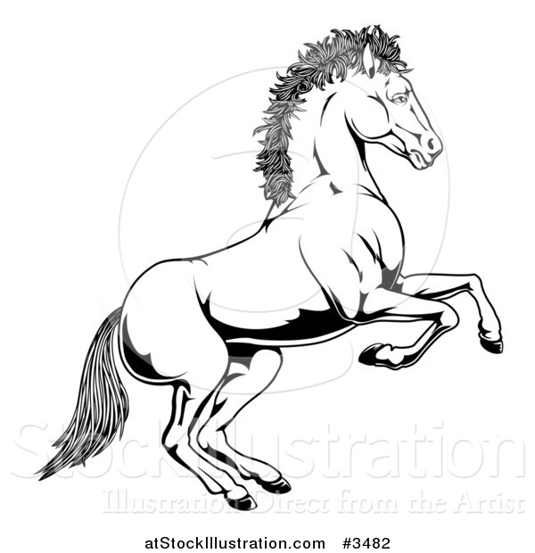 Illustration of a Black and White Rearing Horse