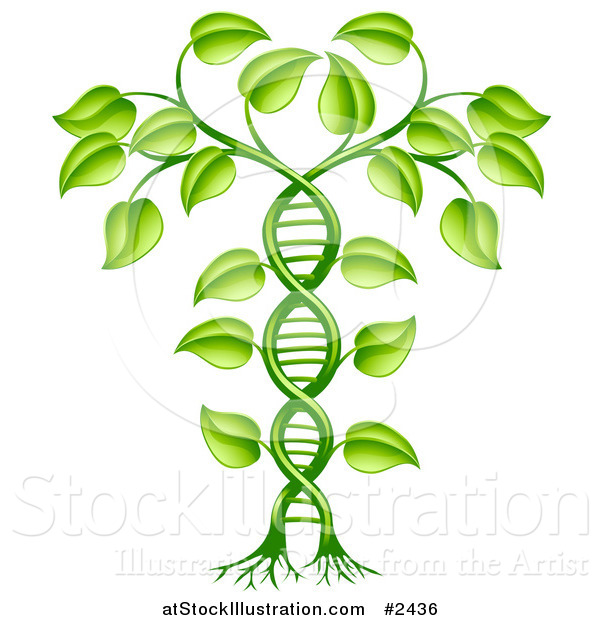 Vector Illustration of a 3d Green DNA Crop Gene Modification Helix Plant