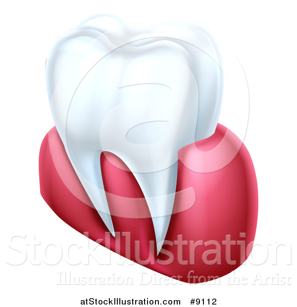 Vector Illustration of a 3d Human Tooth and Gums