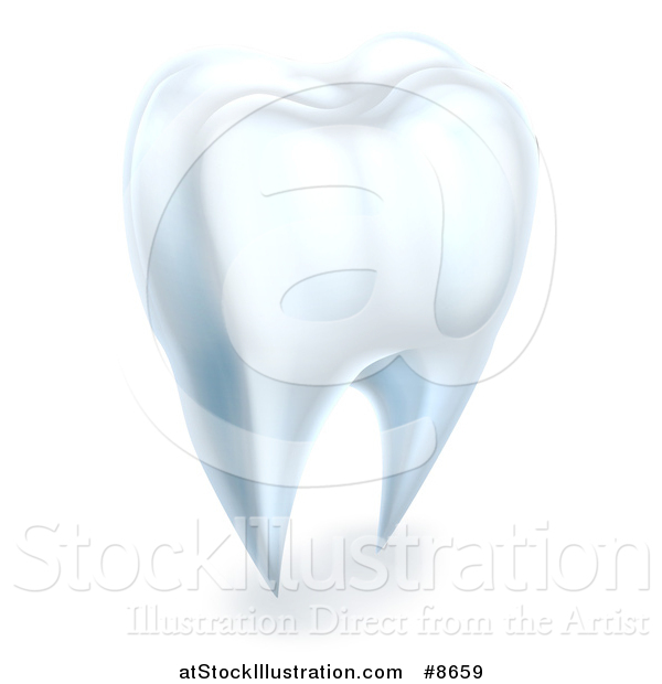 Vector Illustration of a 3d Human Tooth
