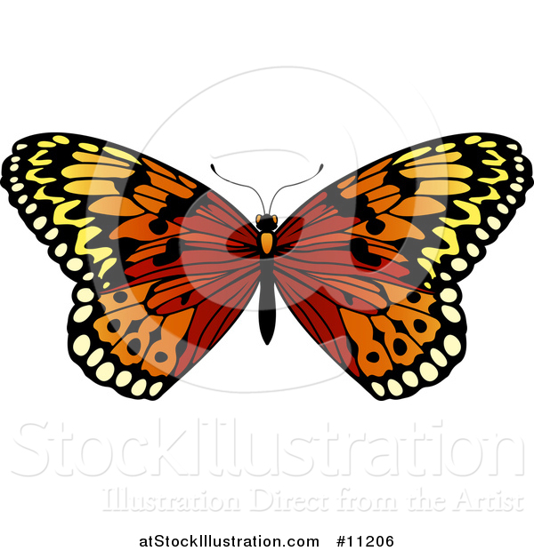Vector Illustration of a Beautiful Butterfly