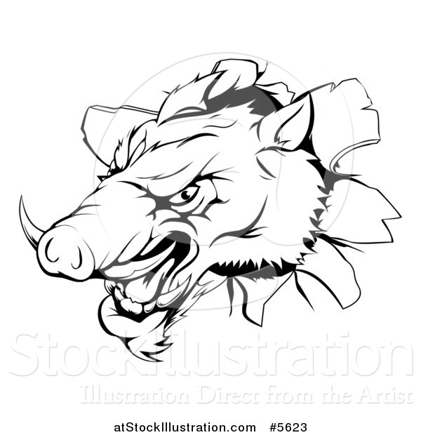 Vector Illustration of a Black and White Aggressive Boar Mascot Breaking Through a Wall