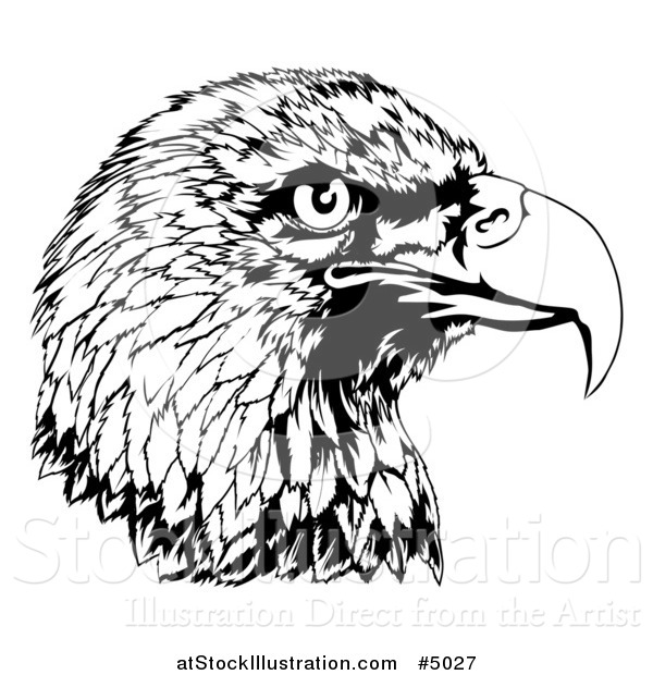 Vector Illustration of a Black and White Bald Eagle Head in Profile