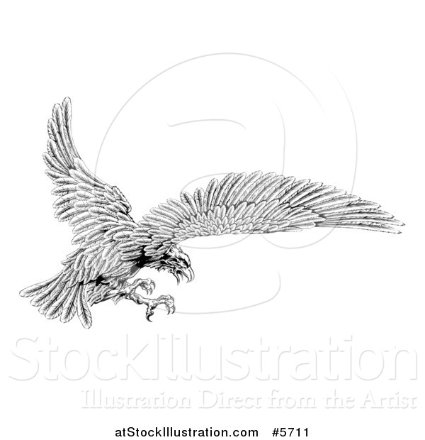 Vector Illustration of a Black and White Eagle Flying with Talons out