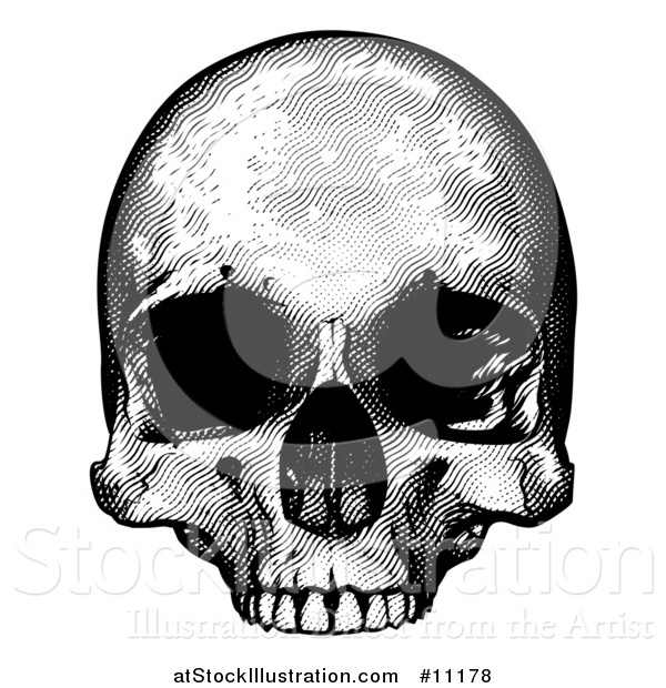 Vector Illustration of a Black and White Engraved Human Skull