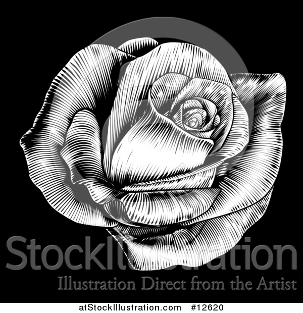 Vector Illustration of a Black and White Engraved Rose Flower on Black
