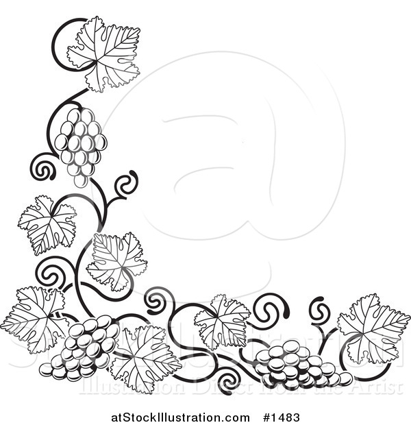 Vector Illustration of a Black and White Grape Vine with Bunches of Grapes and Leaves Curling Along a Bottom Left Corner Edge