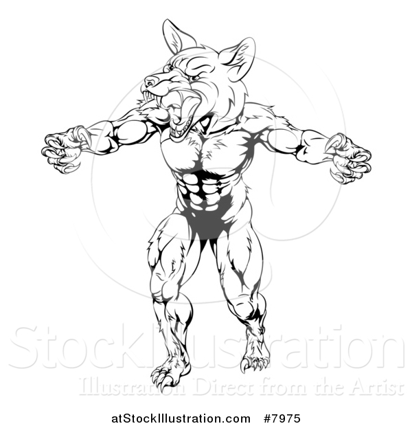 Vector Illustration of a Black and White Muscular Fox Man Mascot Lunching Forward to Attack