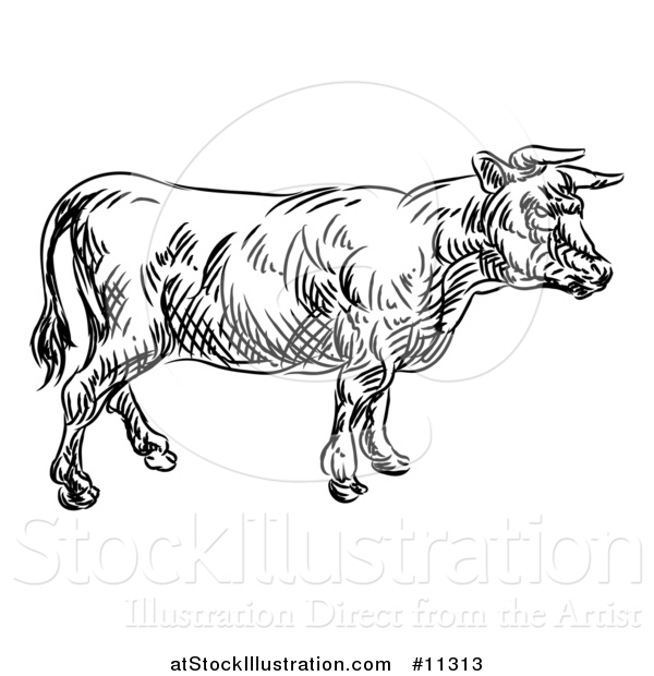 Vector Illustration of a Black and White Sketched Cow in Profile