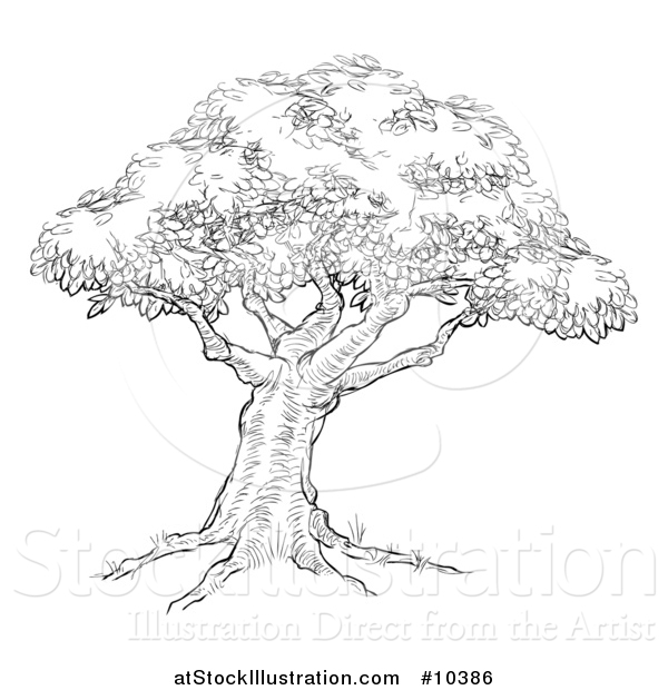 Vector Illustration of a Black and White Sketched Tree