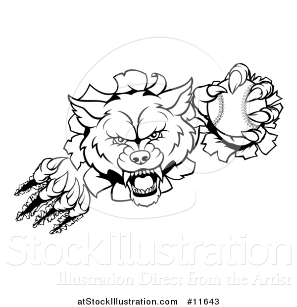 Vector Illustration of a Black and White Tough Wolf Mascot Breaking Through a Wall and Holding a Baseball