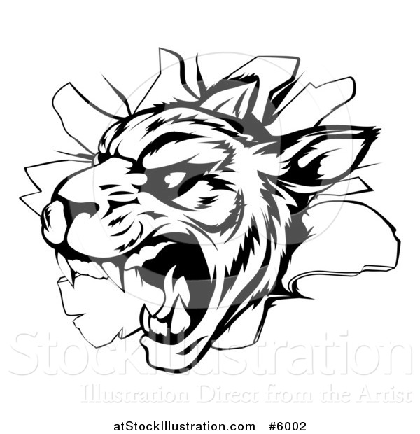 Vector Illustration of a Black and White Vicious Tiger Mascot Breaking Through a Wall