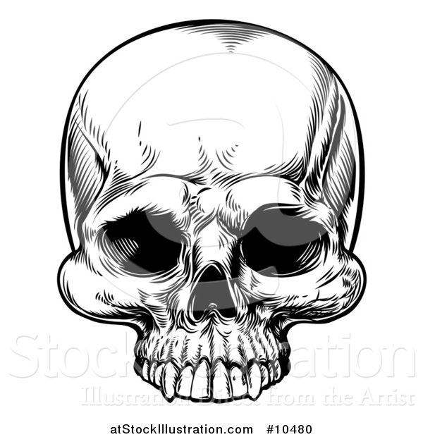 Vector Illustration of a Black and White Woodcut Etched or Engraved Skull