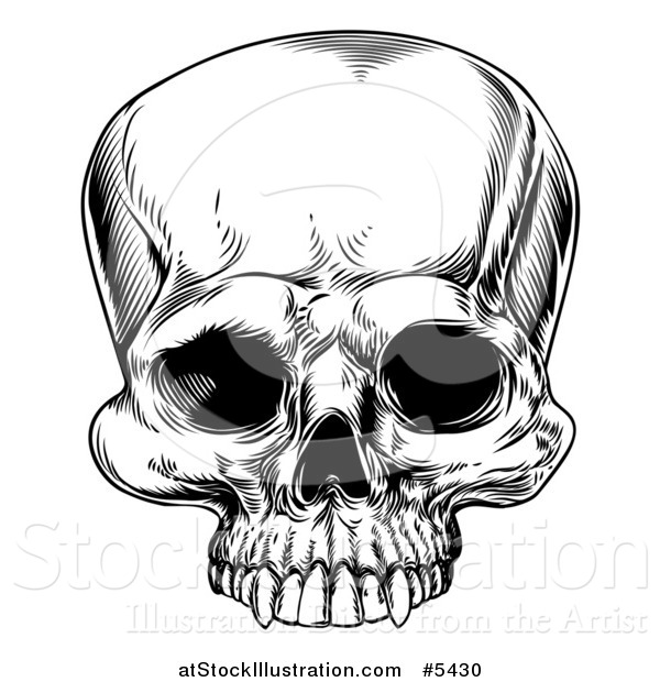Vector Illustration of a Black and White Woodcut Human Skull