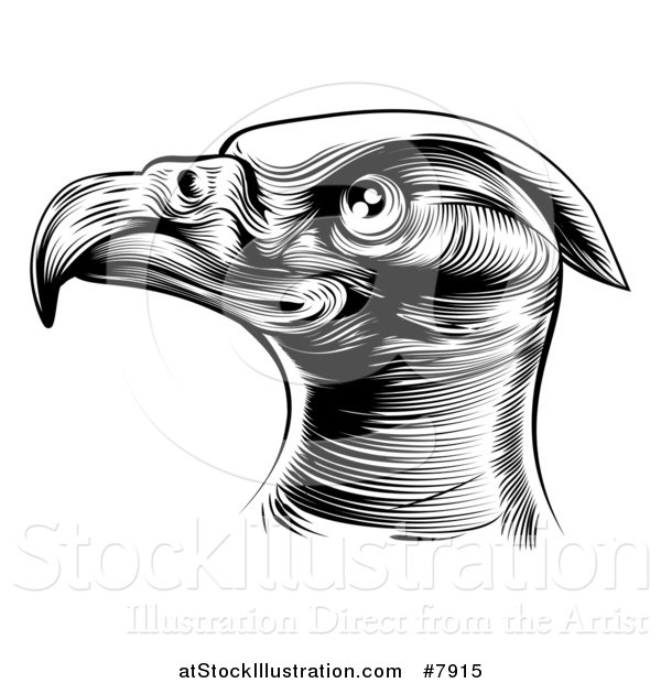 Vector Illustration of a Black and White Woodcut or Engraved Bald Eagle Head