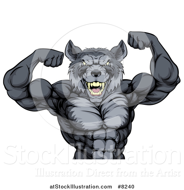 Vector Illustration of a Firece Muscular Gray Wolf Man Mascot Flexing His Muscles, from the Waist up