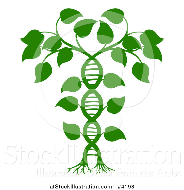 Vector Illustration of a Green DNA Double Helix Plant