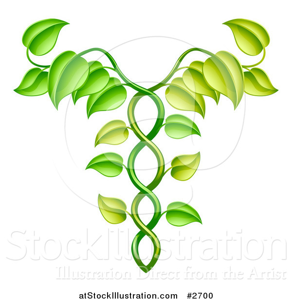 Vector Illustration of a Green Vine Forming an Alternative Medicine Caduceus