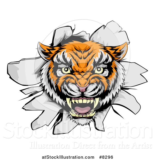 Vector Illustration of a Mad Tiger Mascot Head Breaking Through a Wall