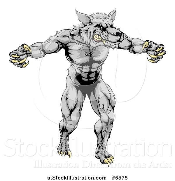 Vector Illustration of a Muscular Aggressive Gray Wolf Man Attacking with Claws out