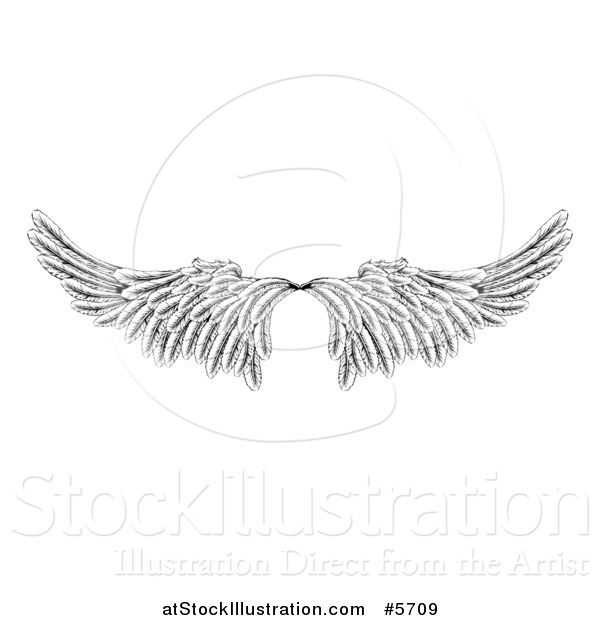 Vector Illustration of a Pair of Black and White Angel or Eagle Wings