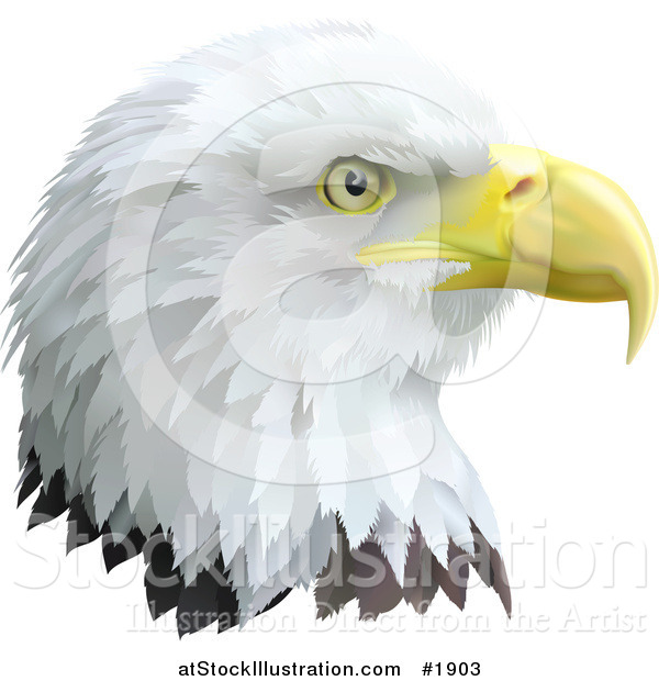 Vector Illustration of a Profiled Bald Eagle Head