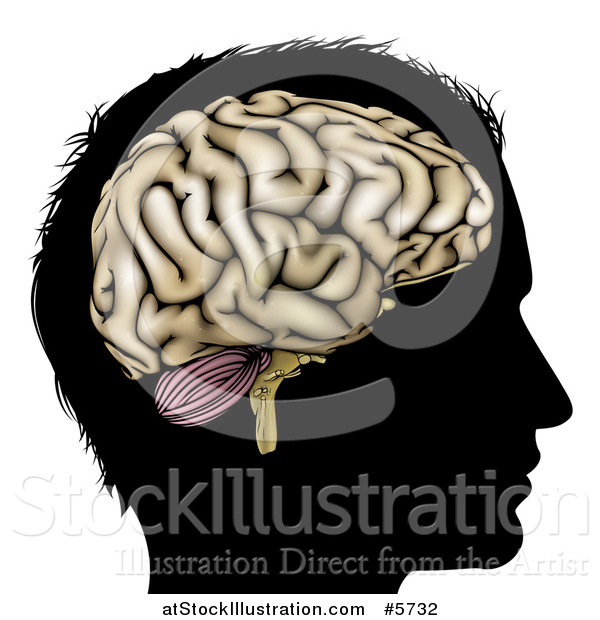 Vector Illustration of a Silhouetted Man's Head with a Visual Brain