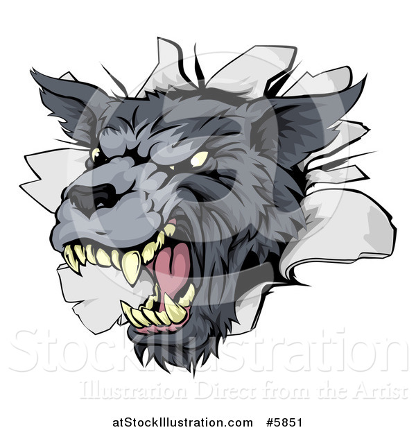 Vector Illustration of a Snarling Gray Wolf Mascot Head Breaking Through a Wall
