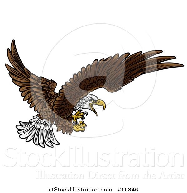 Vector Illustration of a Swooping Bald Eagle with Talons Extended