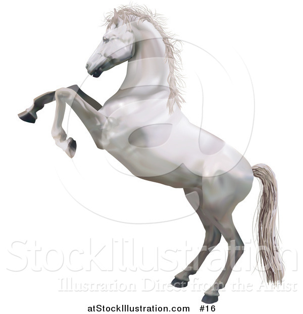 White horse standing on hind legs - photo#13