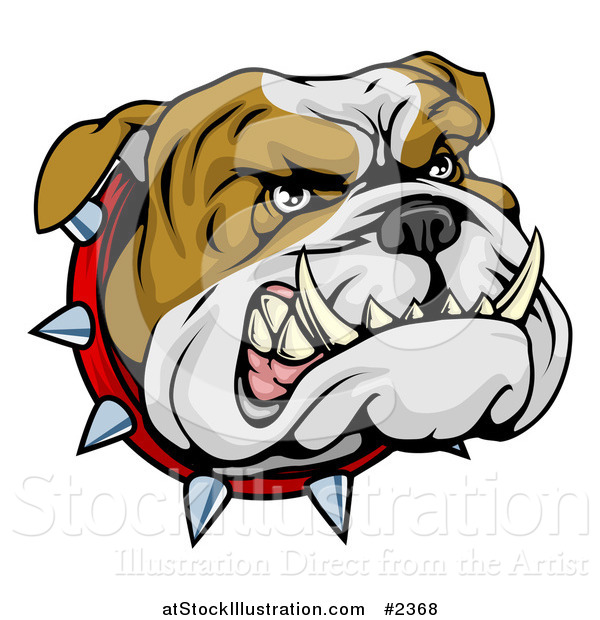 Vector Illustration of an Aggressive Bulldog Face with a Spiked Collar
