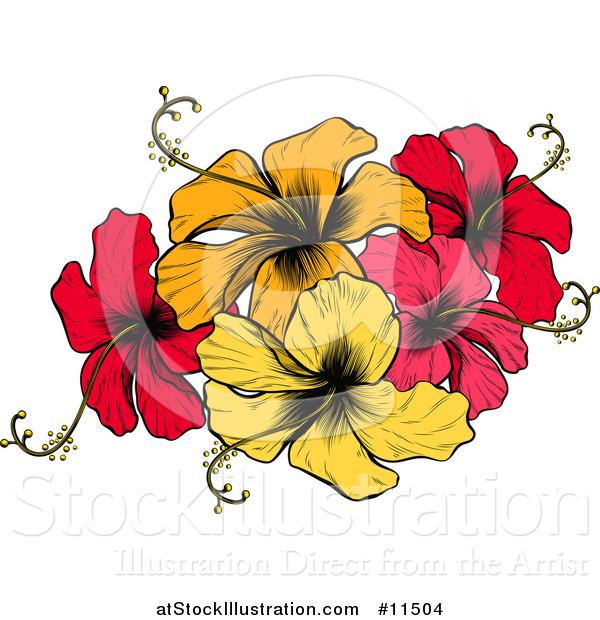 Vector Illustration of an Engraved or Woodcut Colorful Hibiscus Flower Design