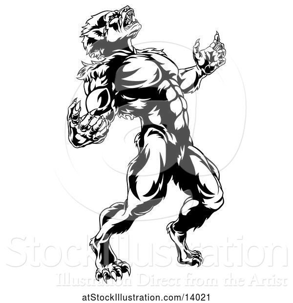 Vector Illustration of Black and White Werewolf Beast Howling and Transforming