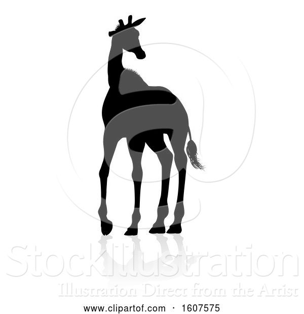 Vector Illustration of Silhouetted Giraffe, with a Reflection or Shadow, on a White Background
