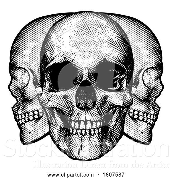 Vector Illustration of Trio of Human Skulls, Black and White Vintage Etched Style