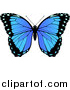 Vector Illustration of a Beautiful Blue Butterfly by AtStockIllustration