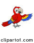 Vector Illustration of a Cartoon Scarlet Macaw Parrot Presenting to the Right by AtStockIllustration