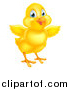 Vector Illustration of a Cute Yellow Easter Chick Facing Slightly Right and Flapping Its Wings by AtStockIllustration