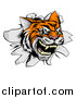 Vector Illustration of a Ferocious Tiger Mascot Head Breaking Through a Wall by AtStockIllustration