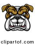 Vector Illustration of a Growling Aggressive Bulldog Mascot Face by AtStockIllustration
