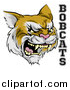 Vector Illustration of a Roaring Aggressive Bobcat Mascot Head and Text by AtStockIllustration