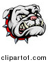 Vector Illustration of a Snarling Gray Bulldog Mascot Face with a Spiked Collar by AtStockIllustration