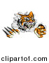 Vector Illustration of a Snarling Tiger Mascot Slashing Through a Wall by AtStockIllustration