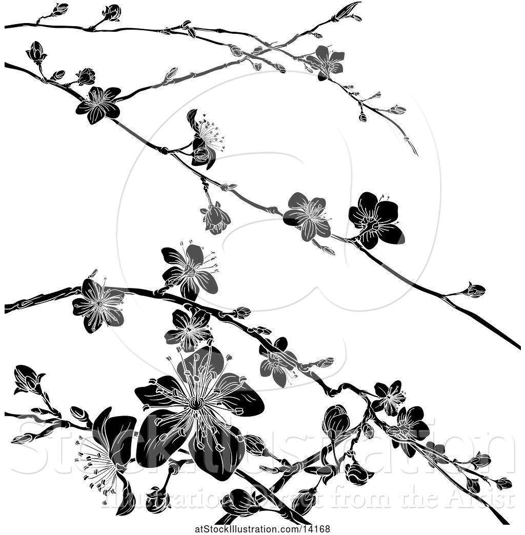 Vector Illustration of Black and White Cherry Blossom ...